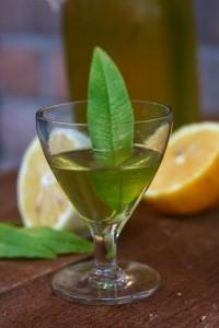 Limoncina o cedrina Liquore